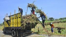 Pemerintah Bentuk SugarCo, Holding BUMN Pabrik Gula