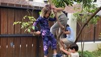 <p>Selain tumbuhan merambat dan beberapa tanaman hias dalam pot, ternyata rumah Zaskia juga ditumbuhi pepohonan, lho. Meski tak terlalu besar, namun anak-anak bisa memanjat dan bermain bersama di sana. (Foto: Instagram: @zaskiadyamecca)</p>