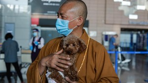 FOTO: Epos Biksu China Penyelamat 8.000 Anjing Jalanan