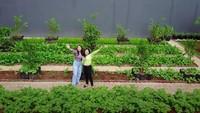 <p>Kalaubebas dari agen syuting, Prilly mengaku suka berkebun dan memanen hasil kebunnya, Bunda. Karena ternyata, Prilly lebih sukaberada di rumahketimbang pergi ke luar rumah tanpa tujuan. (Foto: YouTube Prilly Latuconsina)</p>