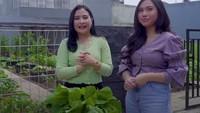 <p>Selain punya rumah yang super besar, ternyata Prilly Latuconsina punya kebun yang tak kalah luas.Dalam vlognya,ia mengajak sahabat lamanya, Aminda untuk panen, Bunda. (Foto: YouTube Prilly Latuconsina)</p>