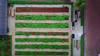 <p>Kebunnya sangat luas dan ditanami berbagai macam tanaman pangan, Bunda. (Foto: YouTube Prilly Latuconsina)</p>