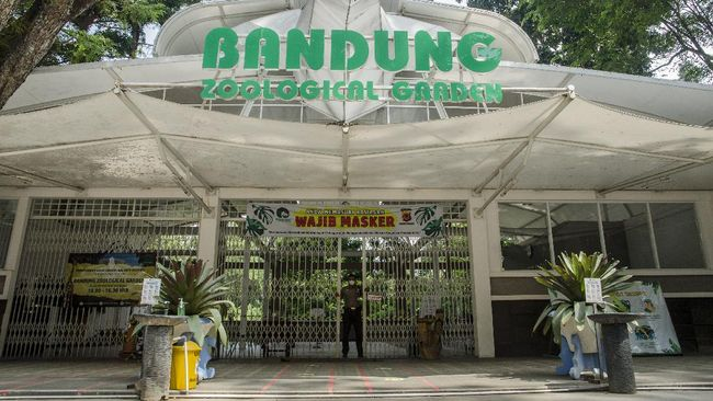Bandung Zoological Garden atau Kebun Binatang Bandung kembali beroperasi pada Senin (27/9).