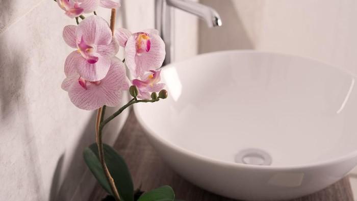 5 Tanaman Hias yang Dapat Bantu Hilangkan Bau Tak Sedap di Toilet