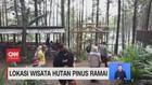 VIDEO: Lokasi Wisata Hutan Pinus Ramai
