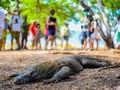 Pemprov NTT Klaim Akan Terima Masukan UNESCO soal Komodo