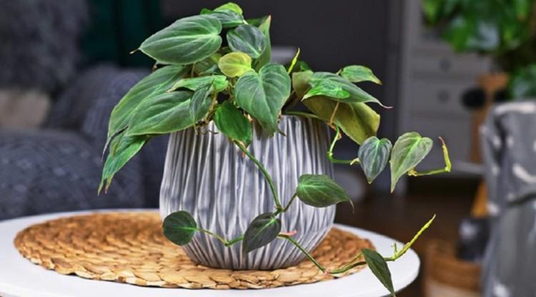 Bagi pemula, mungkin Bunda bingung mulai menanam tanaman hias agar tak bosan selama PPKM. Yuk simak cara menanam tanaman hias untuk pemula.