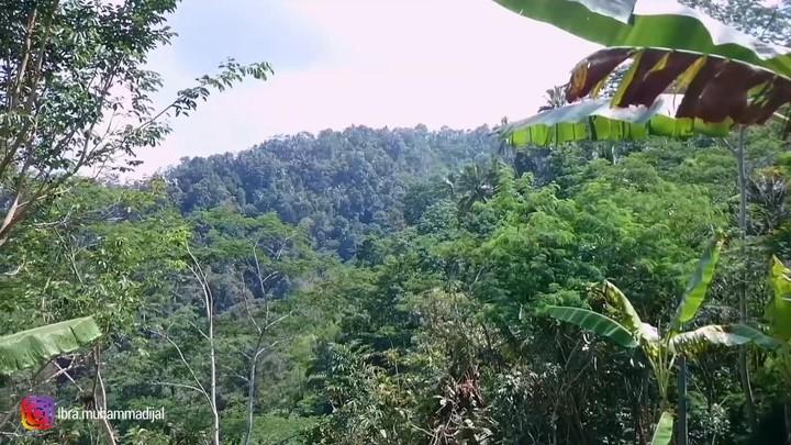 Pemandangan Desa di Kulon Progo