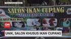 VIDEO: Unik, Salon Khusus Ikan Cupang