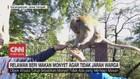 VIDEO: Relawan Beri Makan Monyet Agar Tidak Jarah Warga