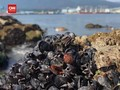 VIDEO: Kerang Mati Tersapu Gelombang Panas Kanada