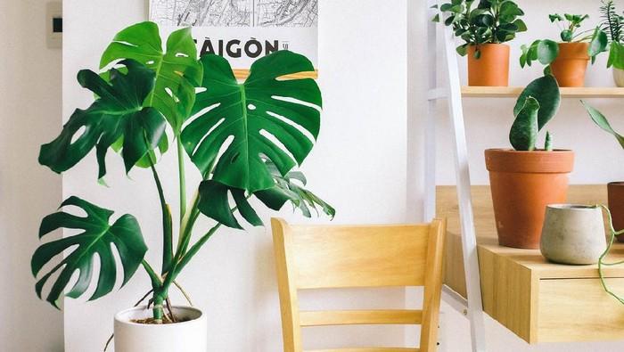 Perawatan Tanaman Hias Indoor: Suplemen dan Pupuk yang Diperlukan