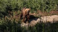 FOTO: Kisah Haru Penyelamatan Beruang oleh Tentara Austria