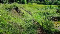 <p>View dari belakang rumah pun enggak kalah menakjubkan. Hamparan rerumputan hijau diselingi dengan kolam kecil, dikelilingi dengan tanaman sayur menambah nilai plus tersendiri untuk rumah Inces TKW Arab ini. (Foto: YouTube @Inces TKW Arab)</p>