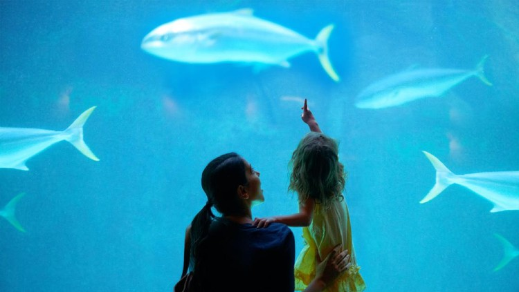 Shot of a young family enjoying a day at the aquariumhttps://195.154.178.81/DATA/i_collage/pi/shoots/783341.jpg
