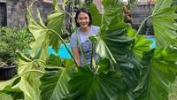 <p>Masih ingin melihat koleksi tanaman hias Dian Nitami yang jumbo, Bunda? Ada philodendron wilsonii yang besar dan rimbun banget, nih. (Foto: Instagram: @bu_deedee)</p>