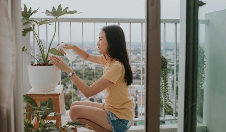 Bagi Bunda yang punya tanaman hias di rumah, yuk kenali ciri-ciri tanaman hias tidak sehat tapi tampak subur. Pahami perbedaannya mulai sekarang ya, Bun.