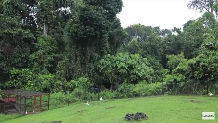 Rumah Tengah Hutan Kalimantan