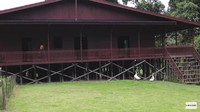 <p>Rumah Prada sendiri terbuat dari kayu, Bunda. Bangunan dibuat menyerupai rumah panggung yang bertingkat. (Foto: YouTube Prada Kalaweit)</p>