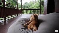 <p>Selain bebek, Prada dan suami juga memelihara seekor kucing lho, Bunda. Lucu banget, ya. (Foto: YouTube Prada Kalaweit)</p>