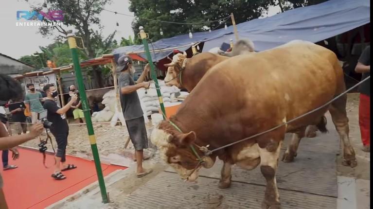 Raffi Ahmad merayakan Idul Adha dengan menyiapkan 10 ekor sapi. Yuk kita intip penampakan sapi kurban milik Raffi!