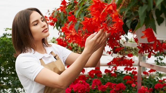 4 Kiat Merawat Tanaman Hias Bunga Agar Tumbuh Subur