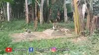 <p>Tak hanya hutan, rumah tersebut juga dikelilingi oleh area pemakaman. Bahkan ada beberapa makam berjejer di halaman sekitar rumah dan menyatu langsung dengan area hutan. (Foto: YouTube Rizquna Channel)</p>