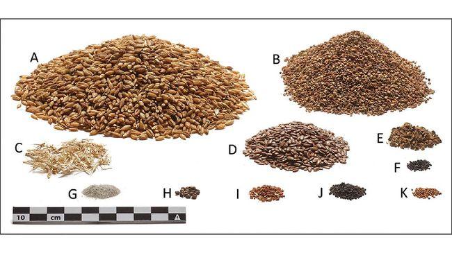 Penelitian terbaru menemukan menu makanan 2400 tahun lalu. Menu makanan manusia ini berhasil terungkap dari rekonstruksi mumi.