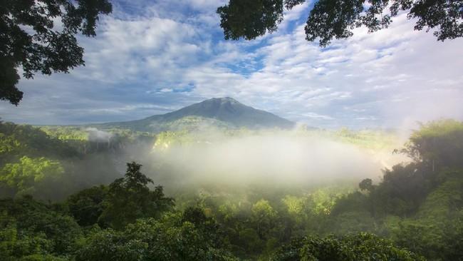 Alasan Hutan Sumatera Masuk 'Daftar Neraka' UNESCO