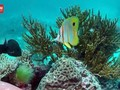 VIDEO: Ancaman Great Barrier Reef Hilang dari Warisan UNESCO