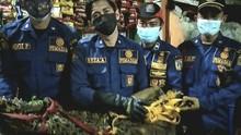 Warga Tambora Jakarta Geger Temukan Buaya 40 Kg di Selokan