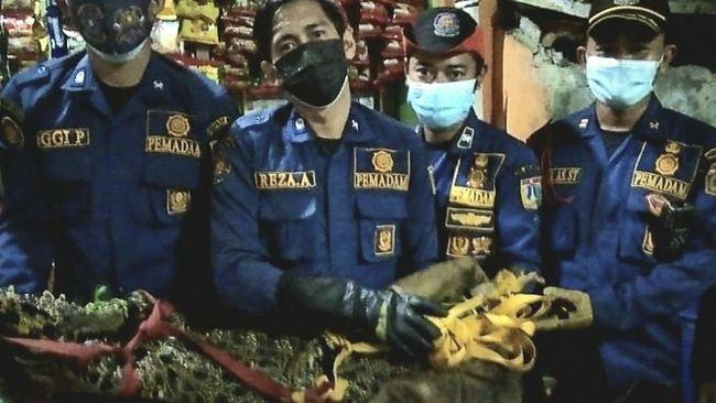Warga Tambora, Jakarta Barat, menangkap seekor buaya sepanjang 175 sentimeter dengan bobot 40 kilogram (kg) yang diduga berasal dari Kali Duri.