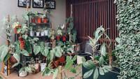 <p>Artis Cantik Ersa Mayori ternyata juga gemar mengurus tanaman hias, Bunda. Tanaman-tanamannya itu disusun begitu rapi hingga enak dipandang. (Foto: Instagram @ersamayori)</p>