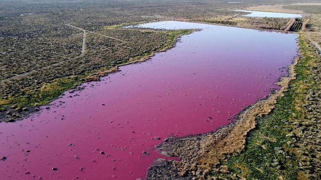 Danau di Patagonia, Argentina, mendadak berubah warna menjadi pink.