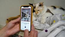 FOTO: Cek Kesehatan dan Mood Kucing Pakai Aplikasi HP