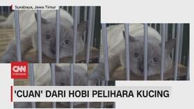 VIDEO: 'Cuan' Dari Hobi Pelihara Kucing
