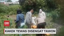 VIDEO: Kakek Tewas Disengat Tawon