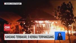VIDEO: Kebakaran Gudang dan Kandang, 5 Kerbau Terpanggang
