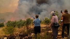 Kebakaran Hutan Besar-besaran Landa Turki, 3 Orang Tewas