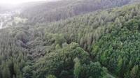 <p>Sekeliling rumahnya dipadati denganvegetasi khas negara empat musim. Salah satunya pohon pinus. (Foto: YouTube Kesa Lisa)</p>