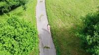 <p>Untuk menuju rumahnya pun sang istri terlihat harus berjalan kaki cukup jauh. (Foto: YouTube Kesa Lisa)</p>
