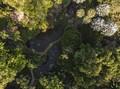 FOTO: Taman Tropis Burle Marx Jadi Warisan Dunia UNESCO