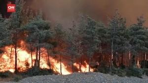 VIDEO: Kebakaran Hutan Turki Tewaskan Sedikitnya 4 Orang