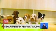 VIDEO: Sehari Menjadi Perawat Satwa Anjing
