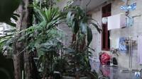 <p>Tak hanya itu, di bagian dalam, Desy mengatakan dahulu terdapat kandang burung besar dan air mancur. Namun, kini halaman rumah hanya berisikan tanaman hias dan pepohonan. (Foto: YouTube Desy Ratnasari)</p>