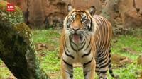 VIDEO: Kesehatan Satwa di Taman Satwa Ragunan Diperiksa