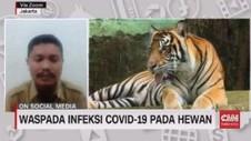 VIDEO: Waspada Infeksi Covid-19 Pada Hewan
