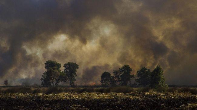 Petugas kesulitan memadamkan kebakaran hutan dan lahan di Kecamatan Pedamaran, Kabupaten Ogan Komering Ilir (OKI), Sumatera Selatan hingga Kamis (23/9).