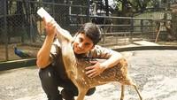 <p>Satwa-satwa jinak seperti rusa dibiarkan berkeliaran dengan bebas di halaman rumahnya. Sementara itu, satwa liar seperti harimau, serigala, binturong, dan burung unta diberi kandang sendiri agar tetap aman. Keluarga Alshad sudah berpengalaman di bidang satwa liar dan telah memiliki izin khusus untuk melakukan konservasi hewan. (Foto: Instagram @alshadahmad)</p>