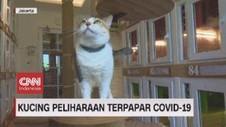 VIDEO: Kucing Peliharaan Terpapar Covid-19